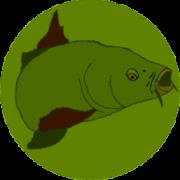 Carp-colour-recoloured